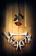 Rose mit Sandaletten