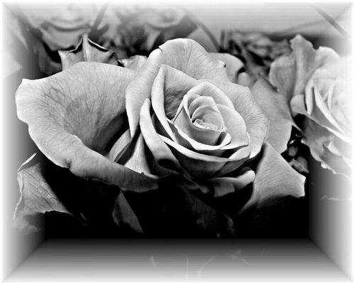 Rose (noch eine)
