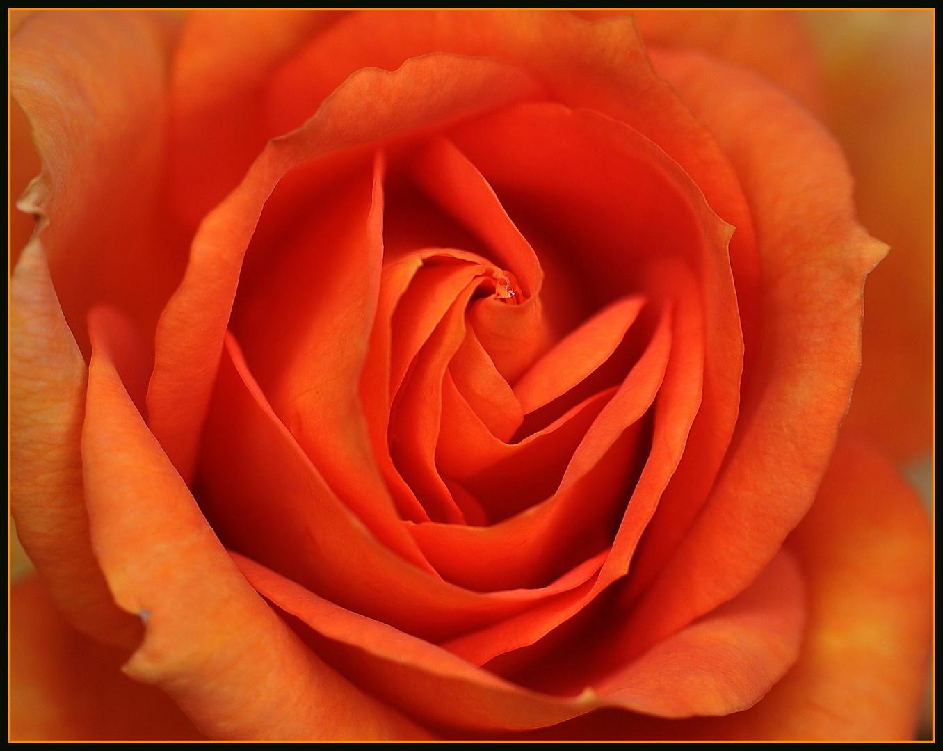 Rose o. Namen...