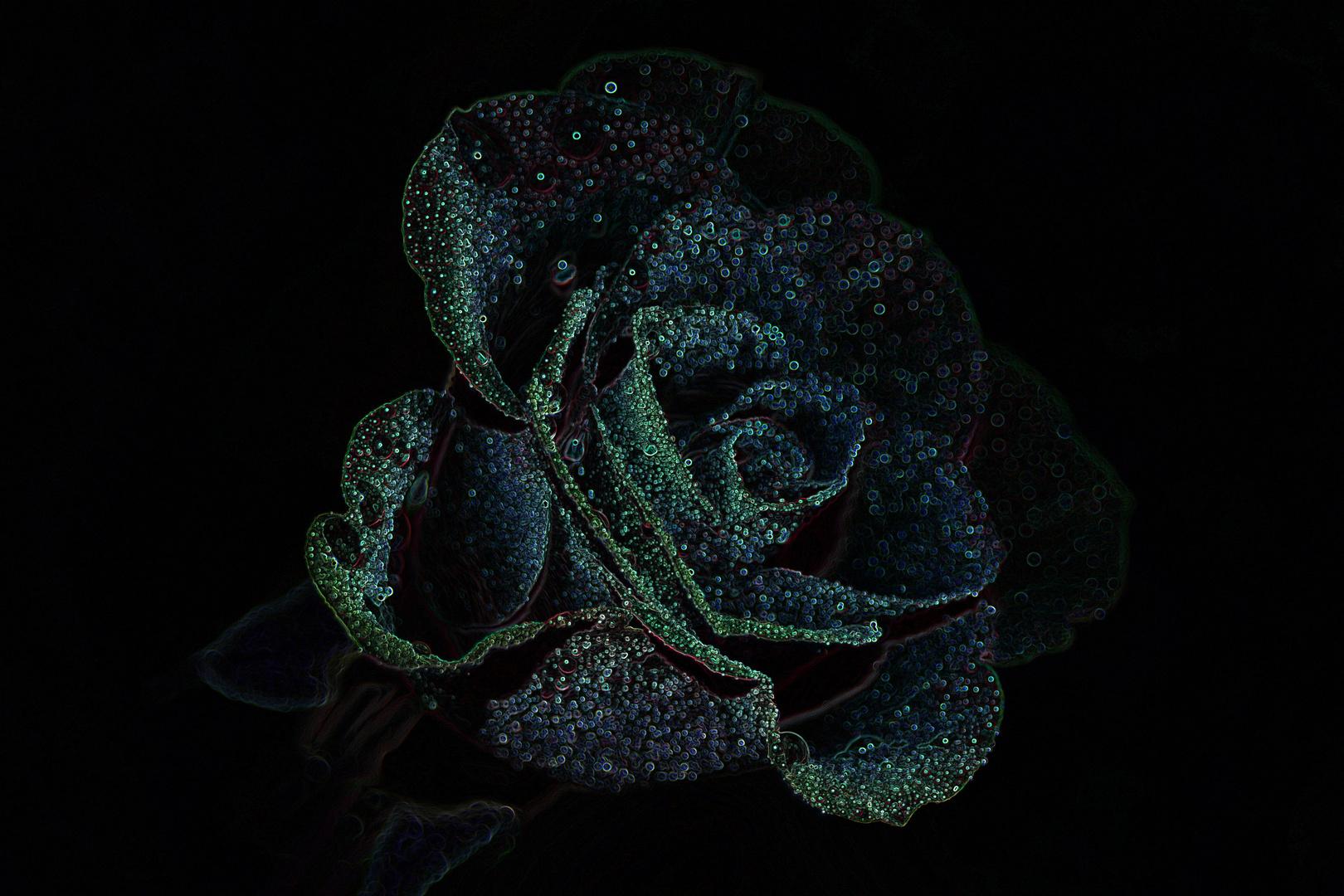 Rose of Phantasie