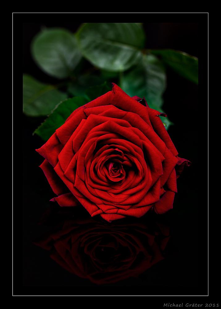 Rose Reloaded