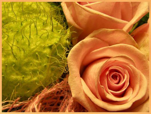 Rose rosé