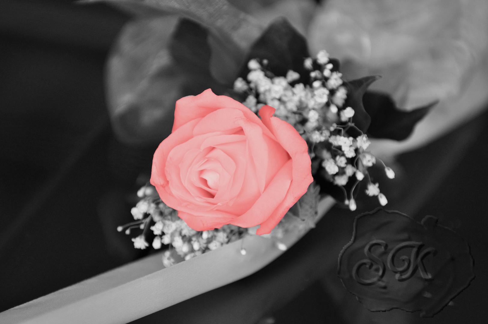 rose schwarz wei und doch farbe foto bild pflanzen pilze flechten bl ten. Black Bedroom Furniture Sets. Home Design Ideas