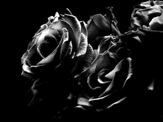 Rose/ s/w