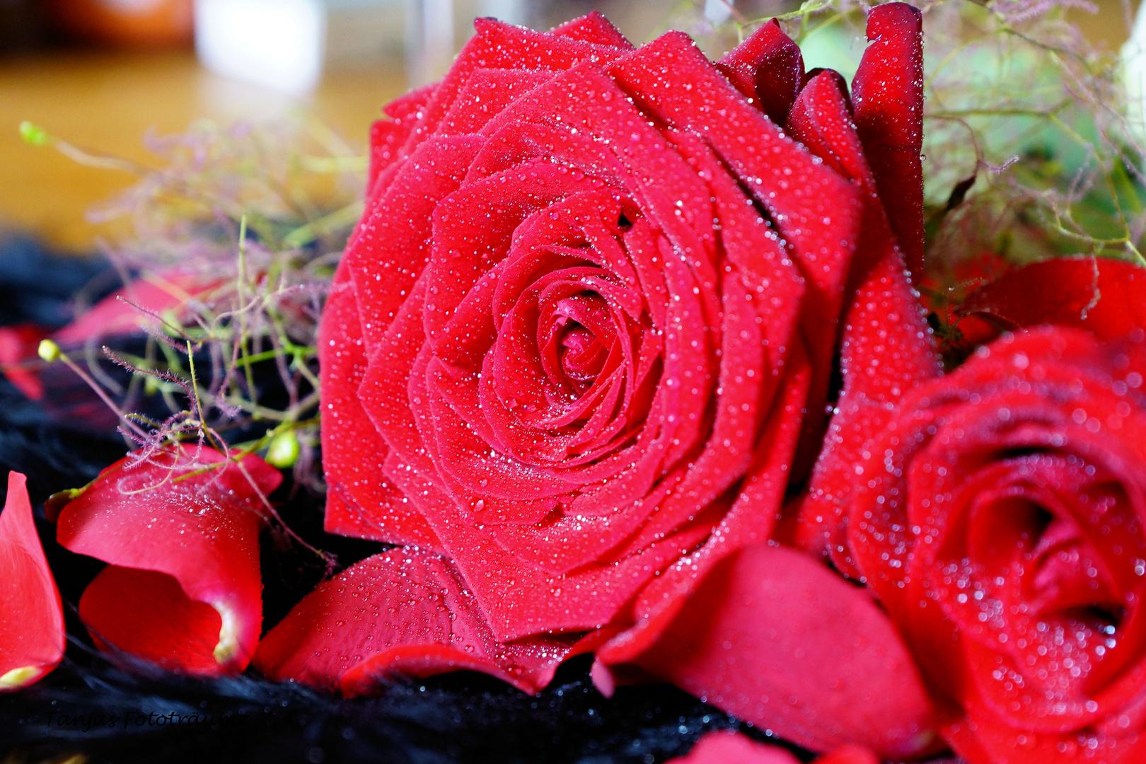 Rose trifft Wasser