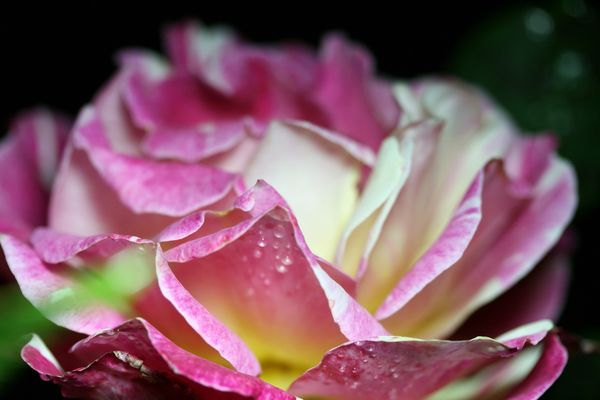 rose un soir d'orage