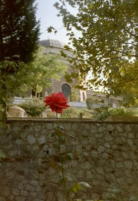 Rose und Grab in Bursa/Türkei