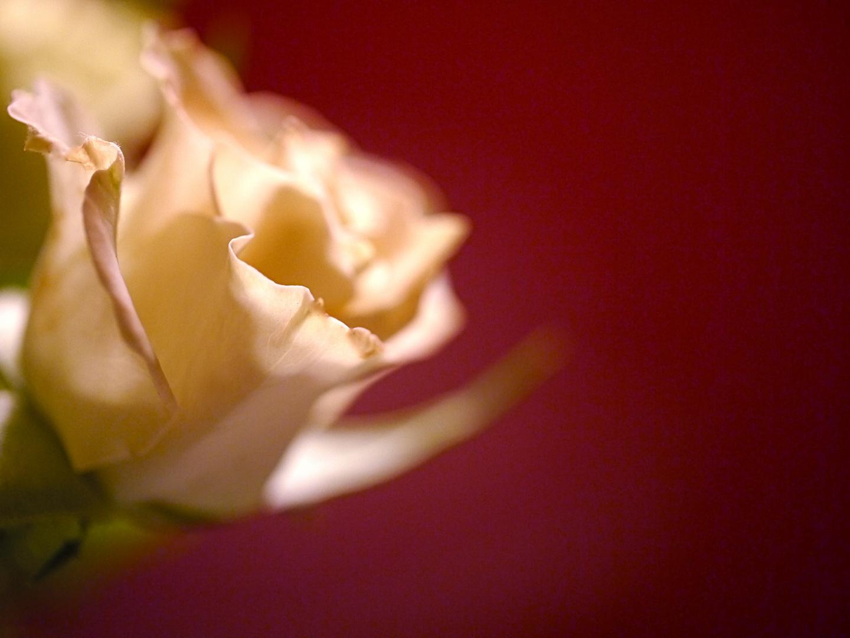 Rose und Rot