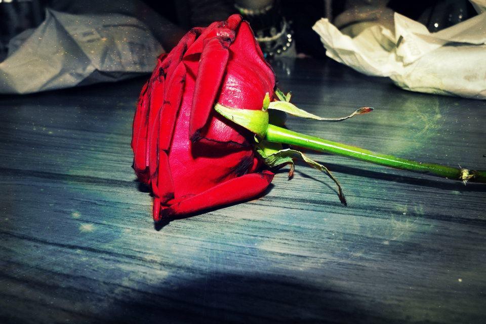 rose von lisa für mich :)