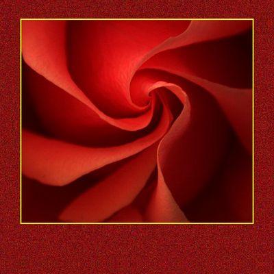 Rose wieder am Teppich