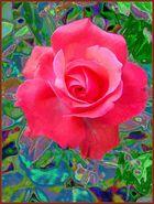 Rose zur Winterzeit