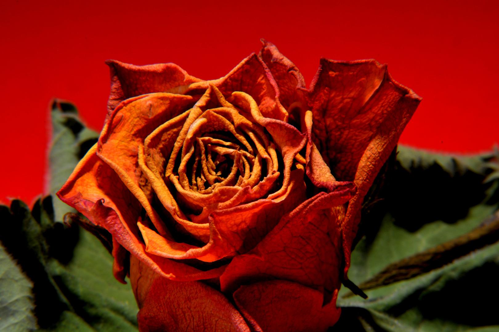 Rose,aber trocken
