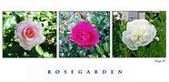 °° Rosegarden °° von Morgentau-8