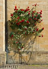 Rosen am Kirchengemäuer