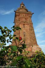 Rosen am Kyffhäuserdenkmal