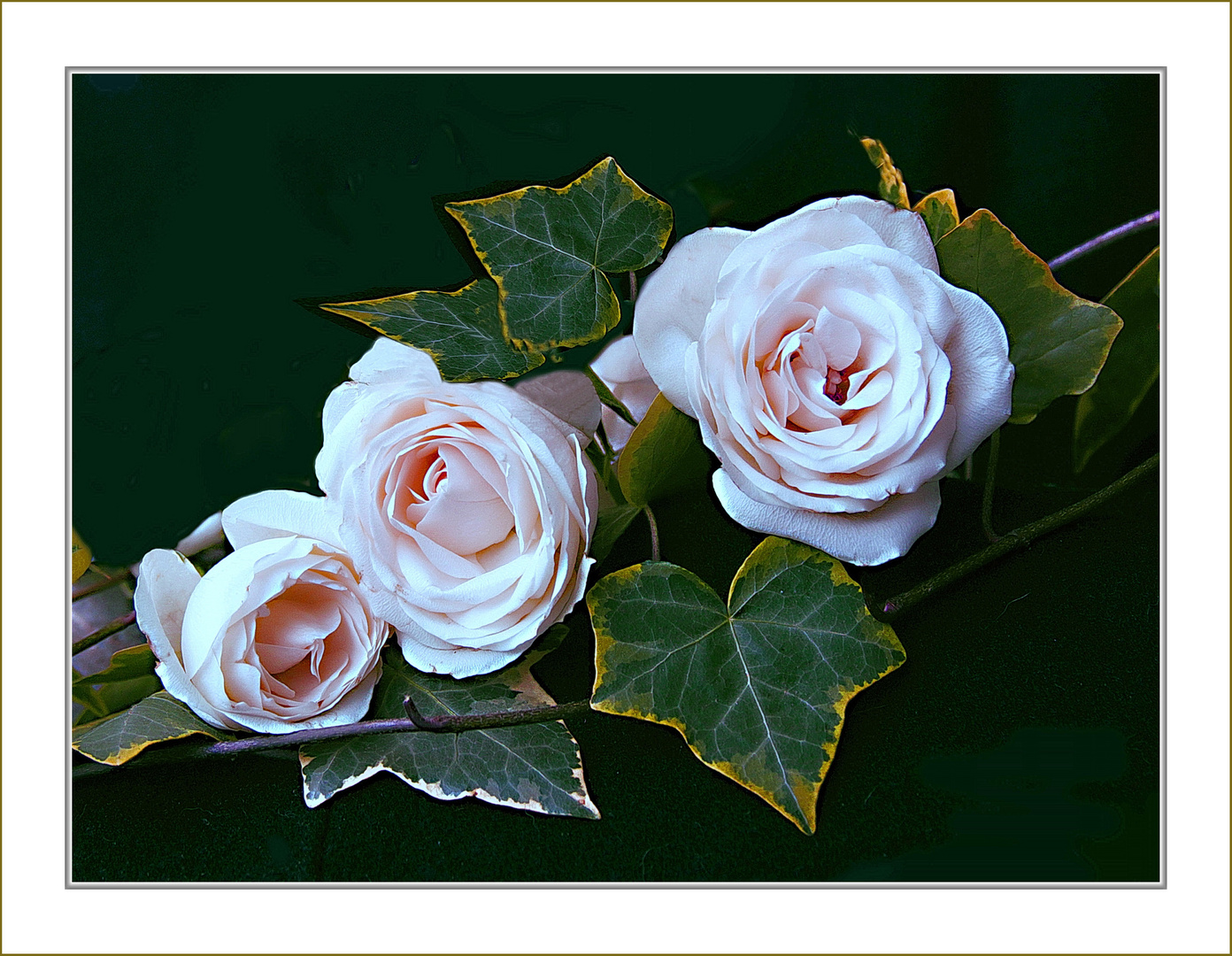 Rosen am Wochenende