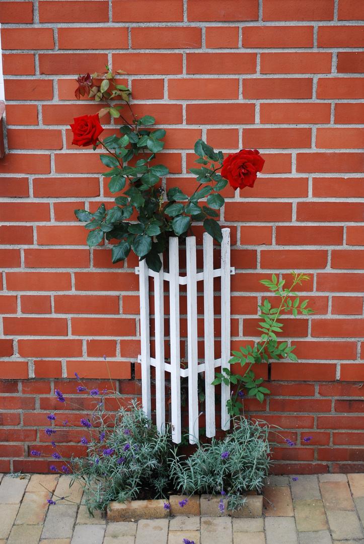 Rosen an jeder Ecke
