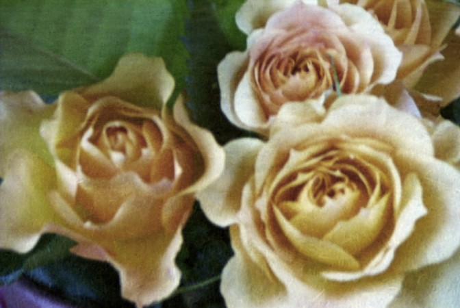 Rosen auf Reispapier