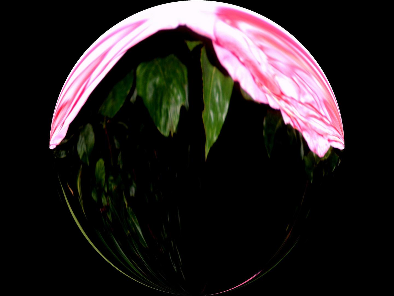 Rosen bei Nacht II