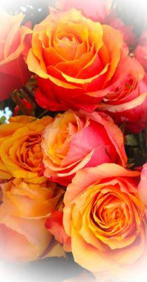 Rosen Blumen der Liebe