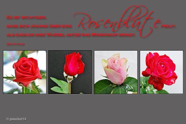 Rosen Collage