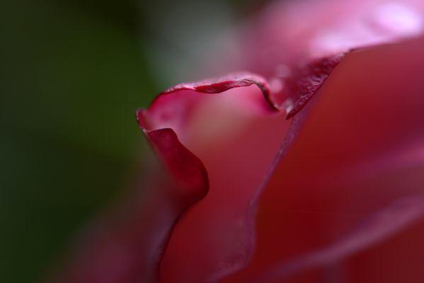 Rosen - Detail 5