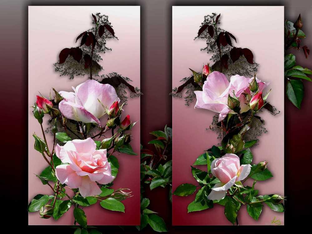 Rosen für das Wochenende.
