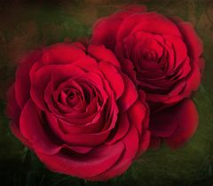 Rosen für die stillen Tage.....