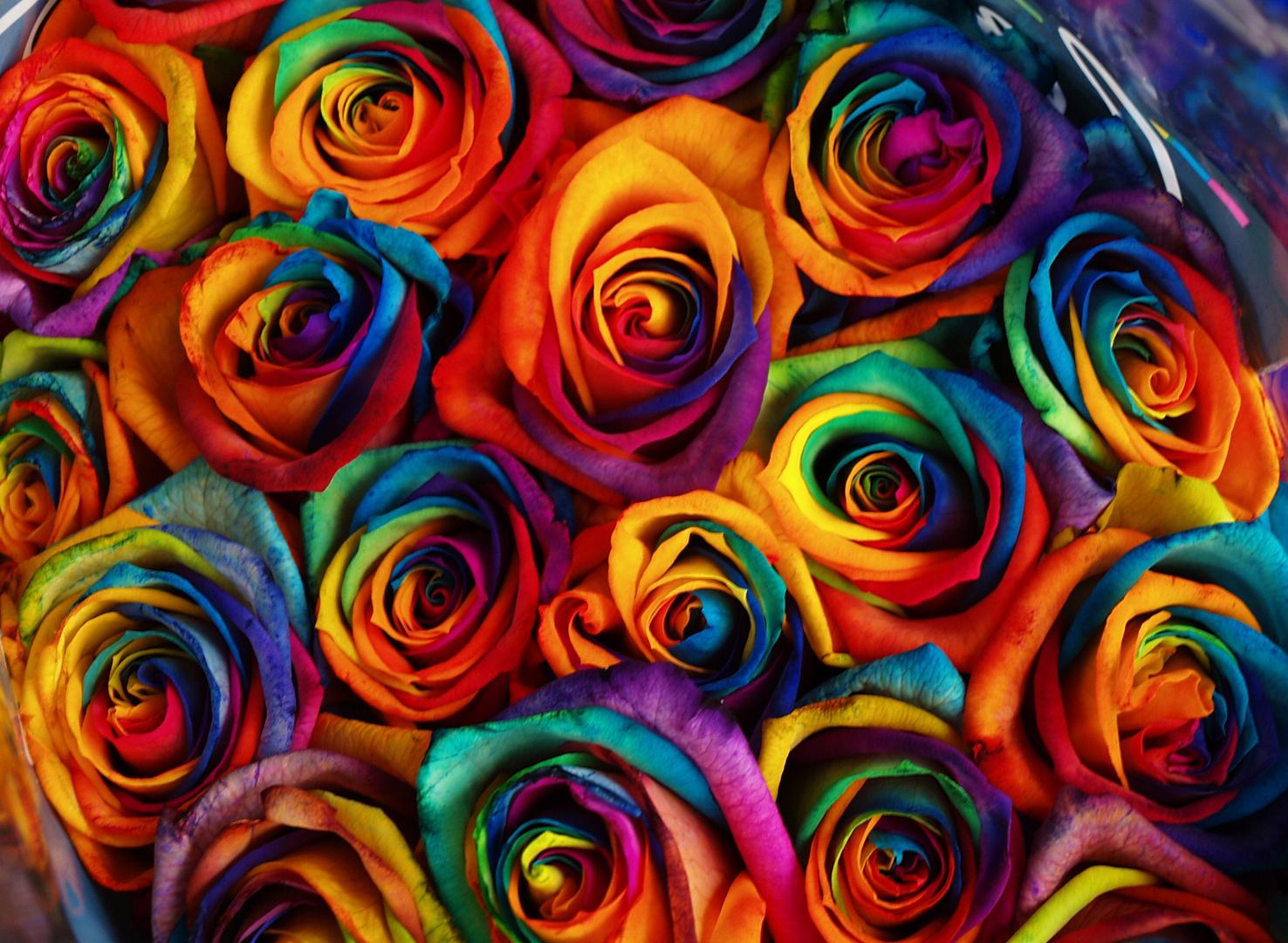 Rosen für Farbenliebe