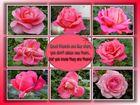 Rosen für meine Freunde.