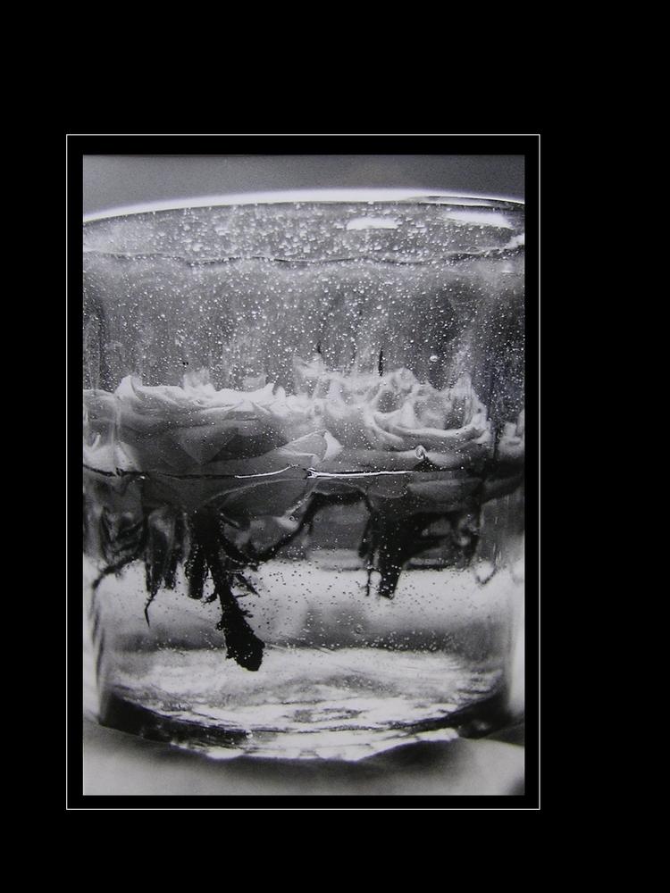 Rosen im Glas
