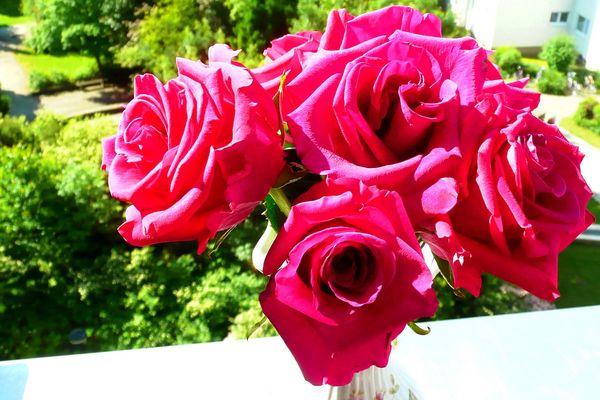 Rosen in ihrem schönsten Rot.