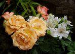 Rosen nach heftigem Regen