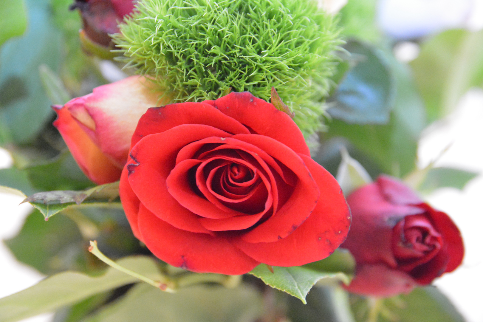 Rosen sind rot...