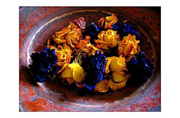 Rosen vom letzten Sommer