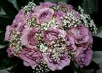 Rosen von Amigo