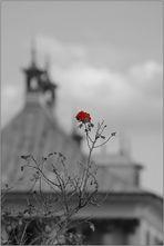 Rosen vor Türmchen ...