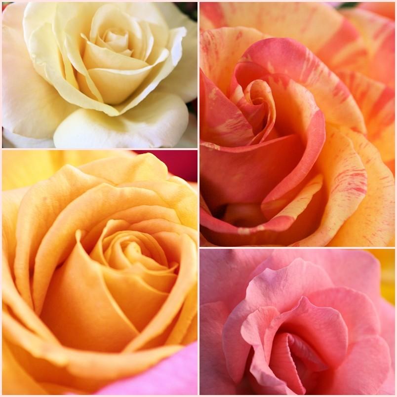 Rosen zaubern ein Lächeln