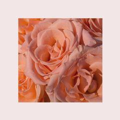 Rosen zum 14.2.2014