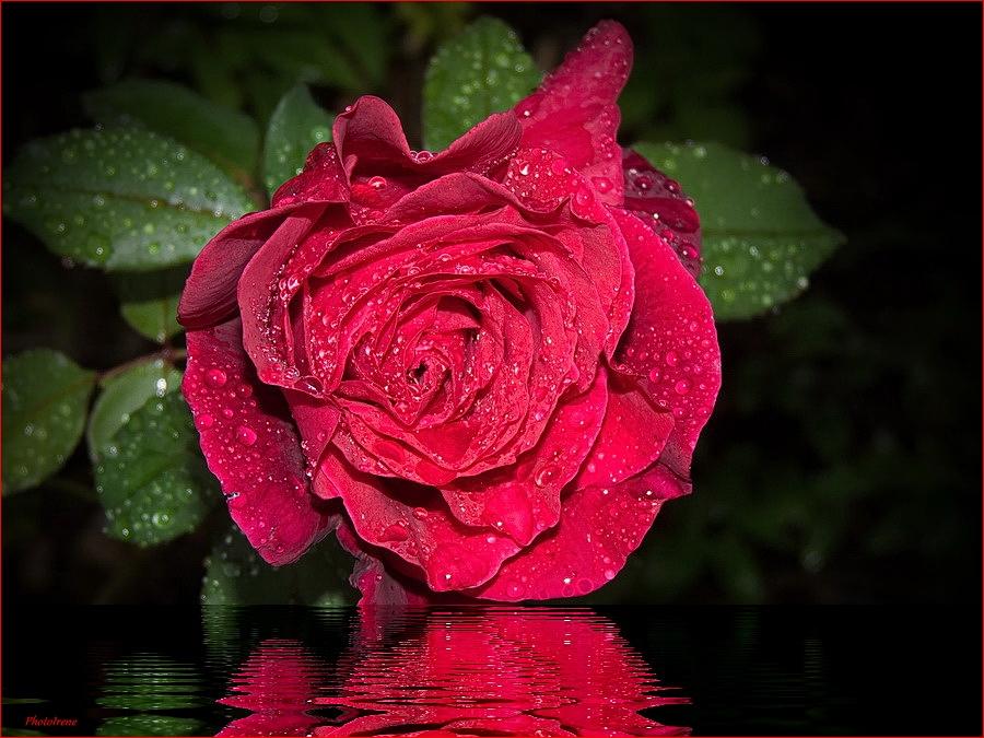 """""""Rosen zum Sonntag """""""