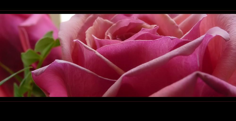 . rosenfenster .