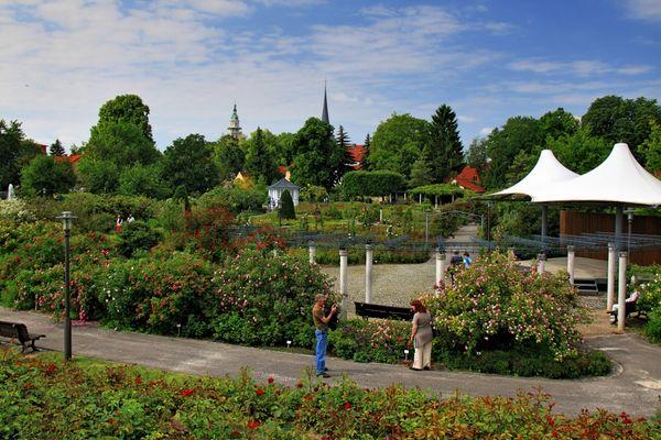 Rosengarten (2)
