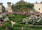 Rosengarten, Boboli-Gärten Florenz