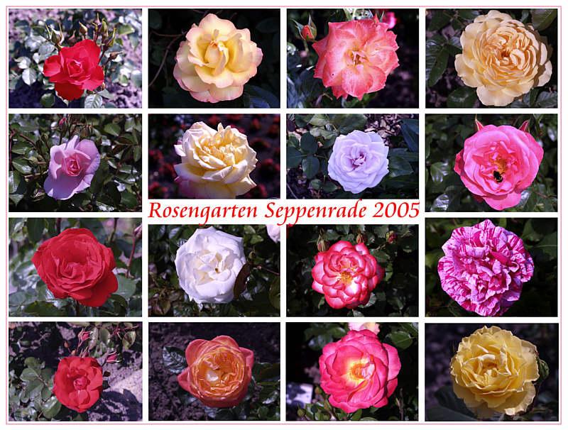 Rosengarten Seppenrade