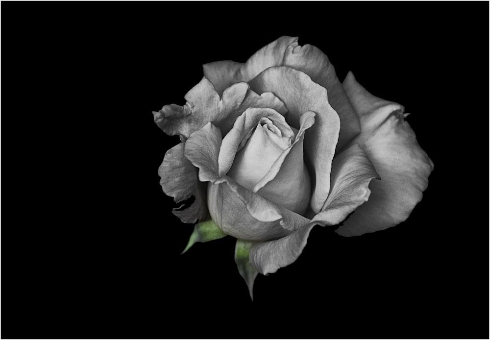 Rosengrün
