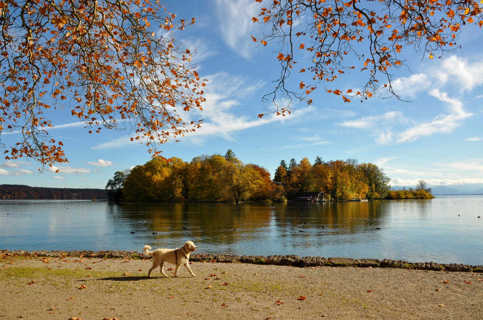 Roseninsel im Starnberger See 6