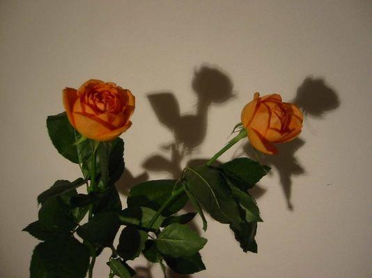 Rosen_ohne_Dornen_im_Zwielicht