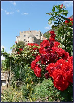 Rosenrot Kastelbell schloss // rose rosse al castello di Castelbello