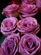 Rosenspallier