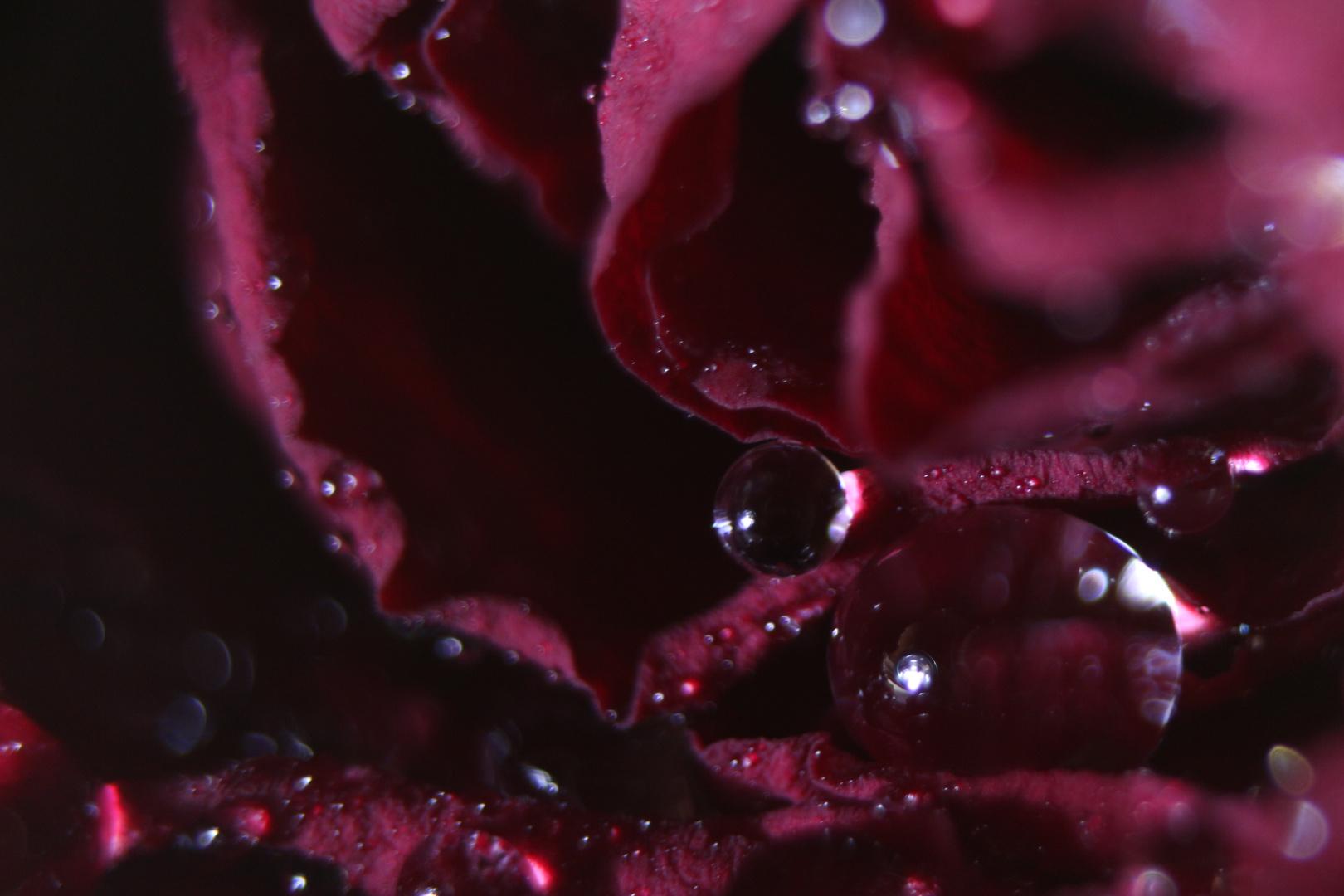 Rosenspiele zu Valentinstag